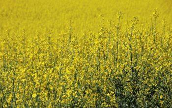 Jak działają różne rodzaje środków ochrony roślin?