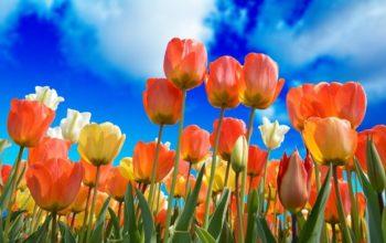 Warto korzystać z poczty kwiatowej