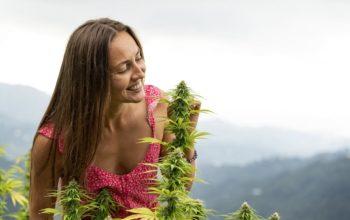 Wybierz lampy odpowiednie do hodowli marihuany